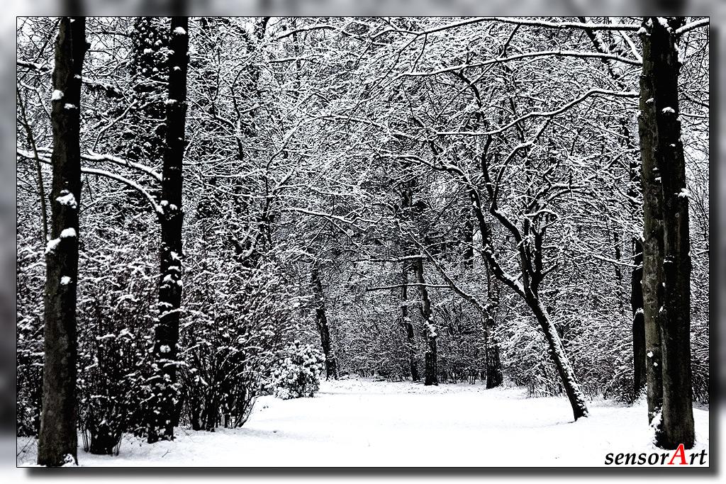 Der Weg ins Unterholz