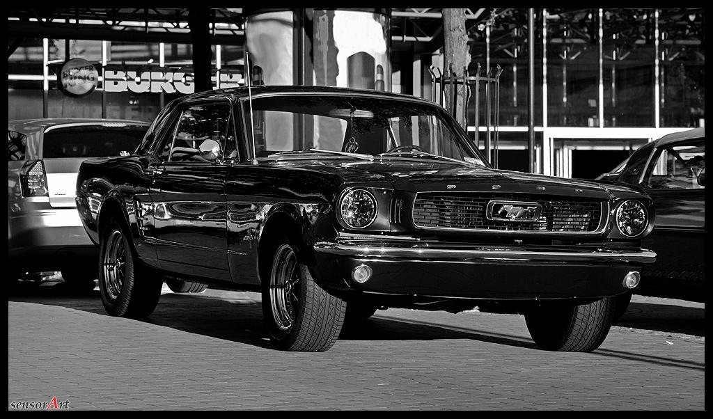 Mustang-in-SW