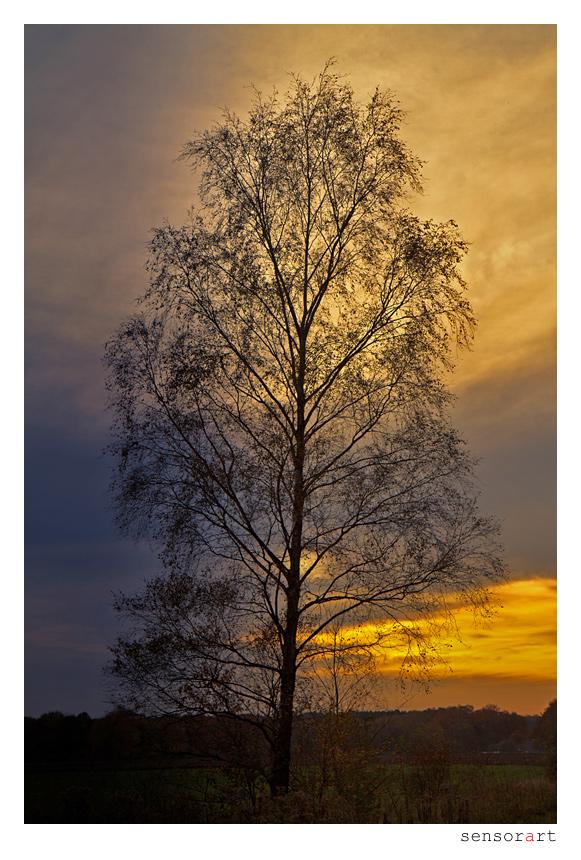 twilight_-_i