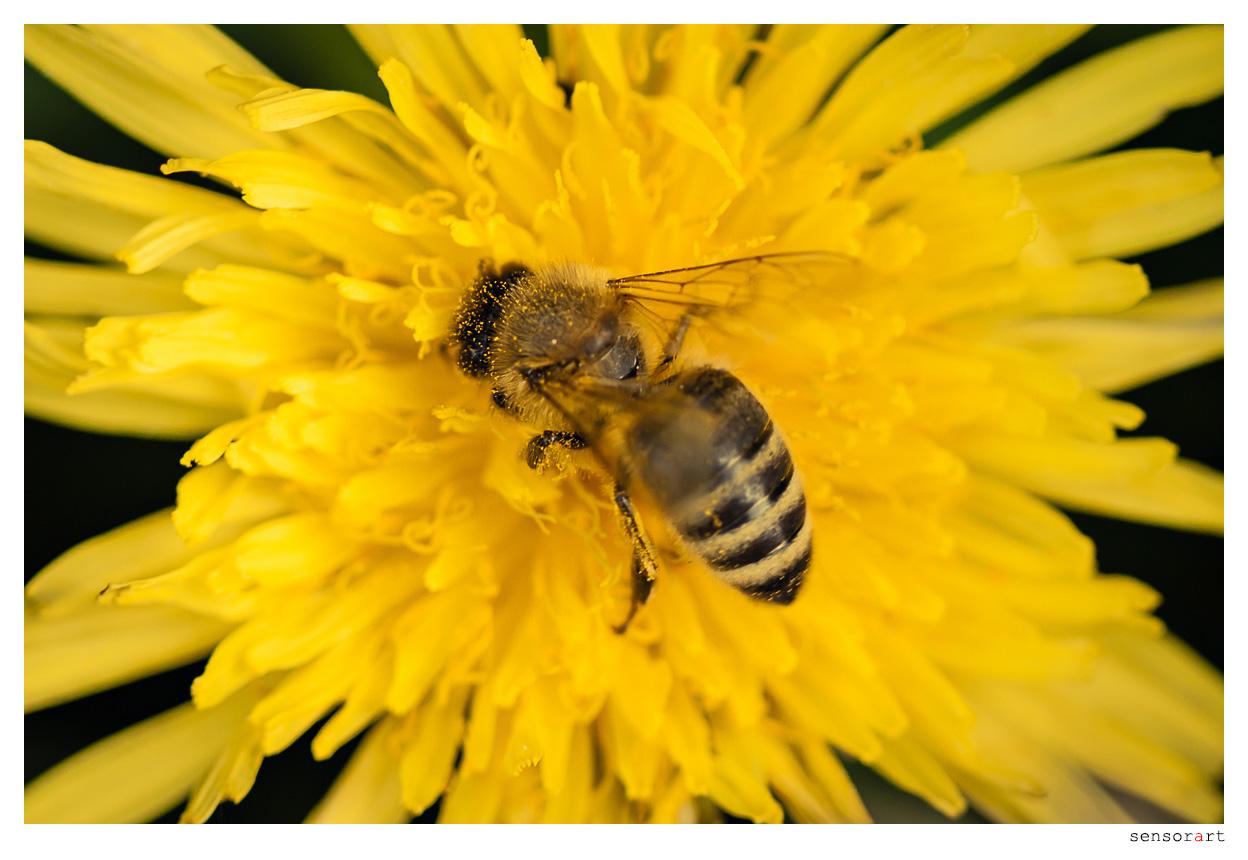 Emsiges Bienchen