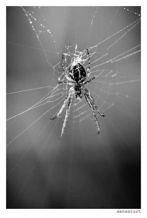 Imse Wimse Spinne