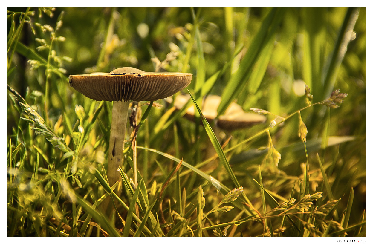 Pilze im Unterholz