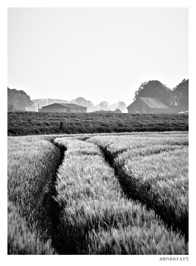 Spuren im Feld