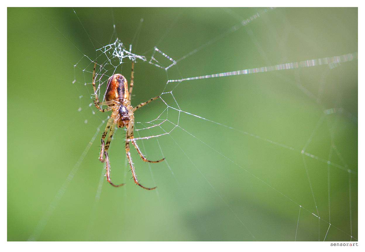 Der Libelle Feind