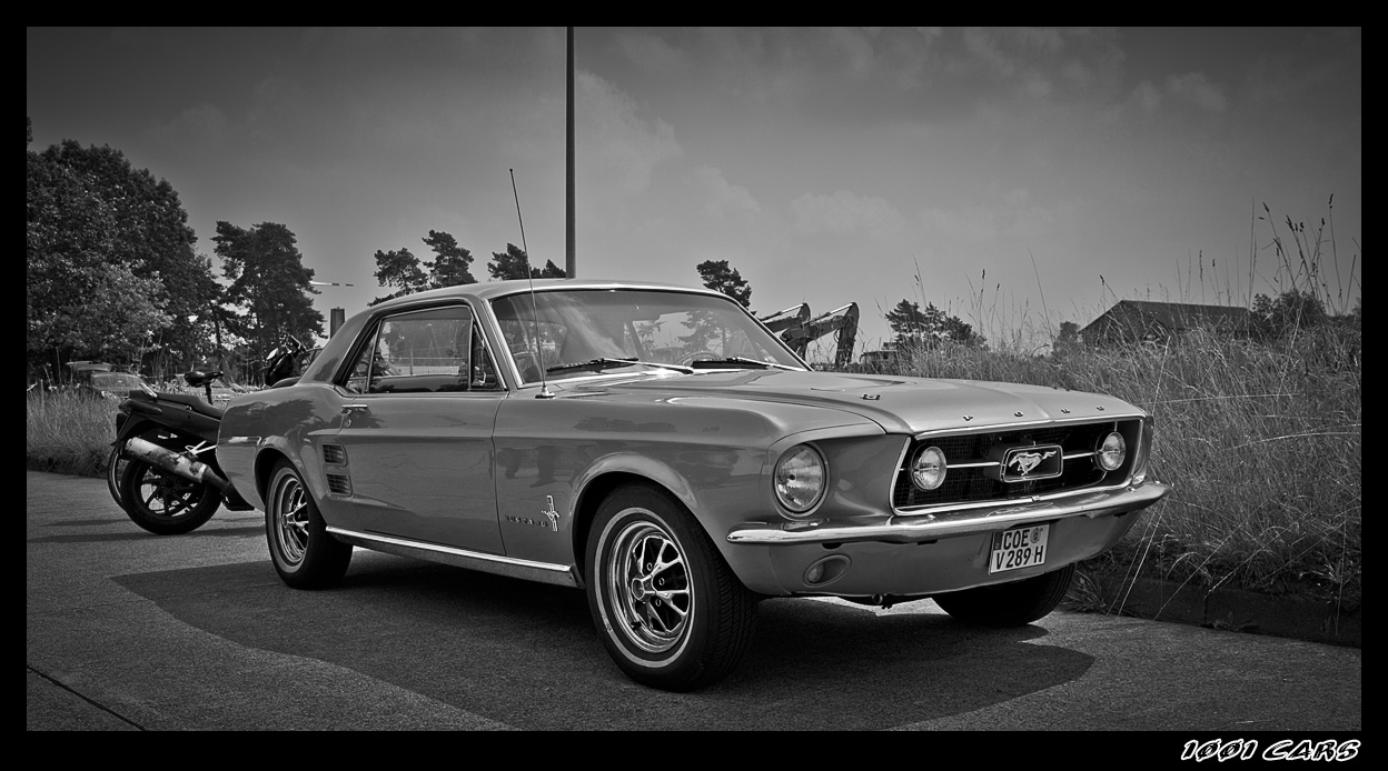 Mustang
