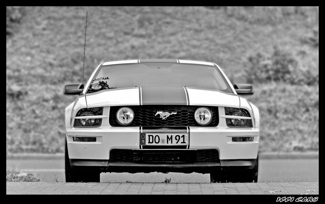 White Mustang