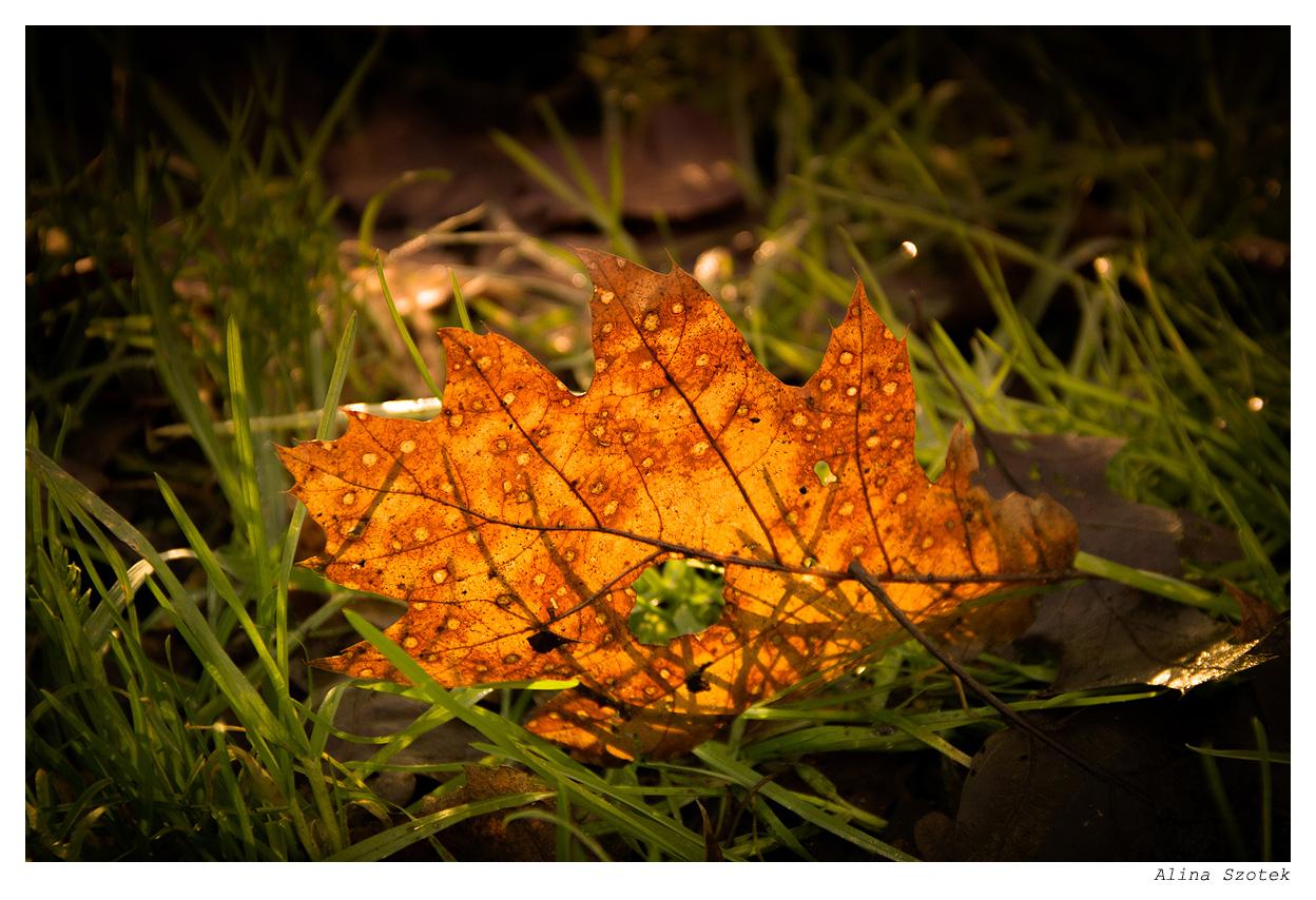 Wie im Herbst