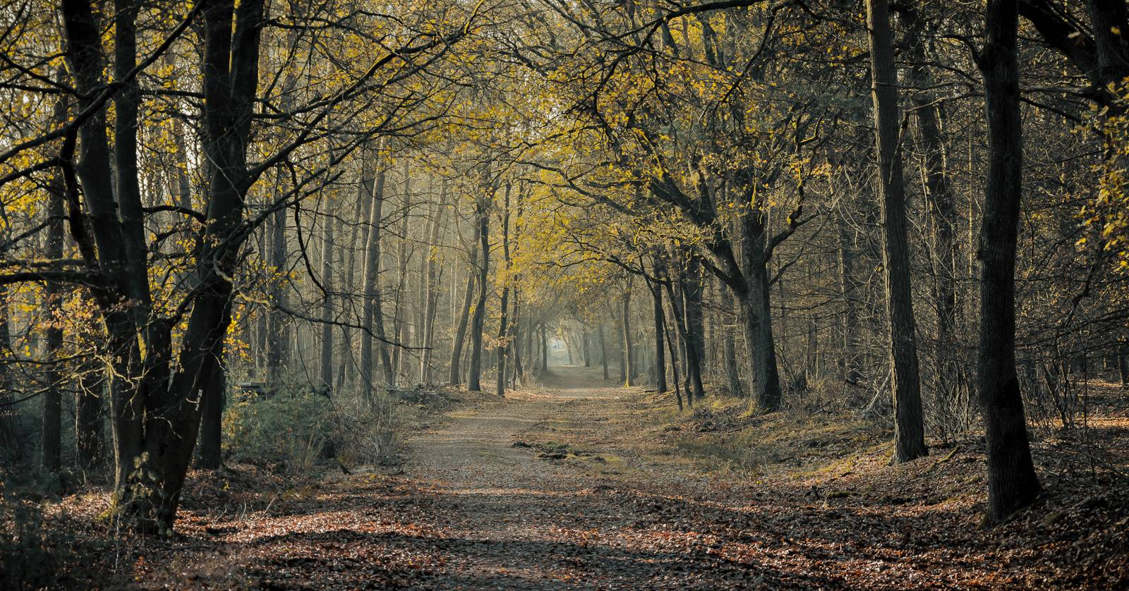 Spaziergang im Wald am Deutener Moor